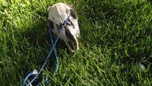 deer skull, sunlight